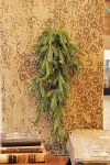 White Spruce Hanging | Green | 34