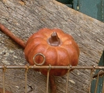 Mini Orange SS Pumpkin