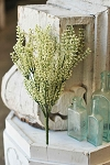 Bursting Astilbe | White | 14