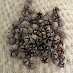 Chiloni Pod-Natural Dried