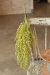 Baby's Grass Hanging | Light Green | 33