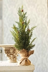 Prickly Pine Tree | Green | 24