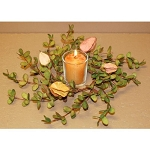 Boxwood & Bud 2.5in Candle Ring