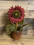 Handmade Waxed Potted Sunflower Burgundy
