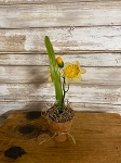 Handmade Potted Daffodil Flower in Pot 9