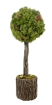 Single Ball Natural Mossy Topiary