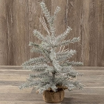 2' SILVER FIR TREE WITH BURLAP BASE
