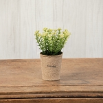 WHITE YARROW IN NATURAL POT