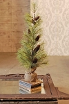 Longleaf Pine Tree with Burlap | 30