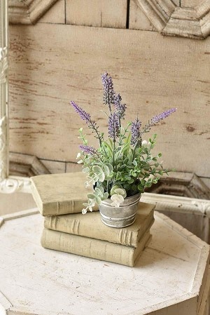 Potted Laughing Lavender | 11
