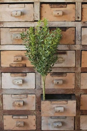 New England Boxwood Bush | 12